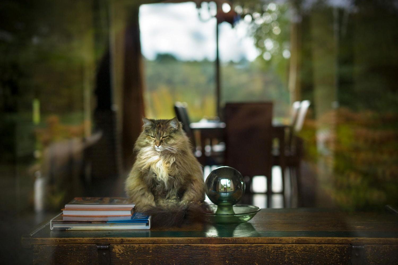 Thước ảnh yên bình của một chú mèo - cư dân của làng Giethoorn