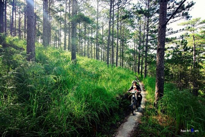 Đường vào rừng thông