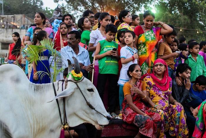 Ở Ấn Độ, bò mang ý nghĩa tâm linh