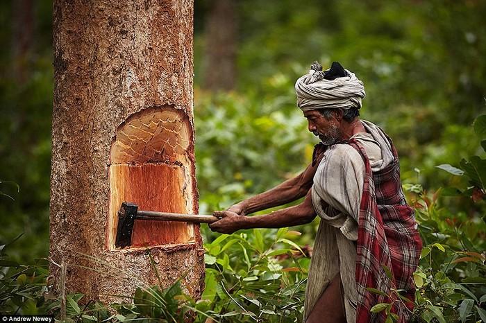 Trải qua thời gian dài, người nguyên thủy có cuộc sống khó khăn và giảm dần số lượng. Tuy nhiên, trong rừng sâu ở Nepal, một nhóm nhỏ người Raute vẫn tồn tại bằng cách bẫy thú hoang, chặt cây cối và sống trong điều kiện đơn giản.