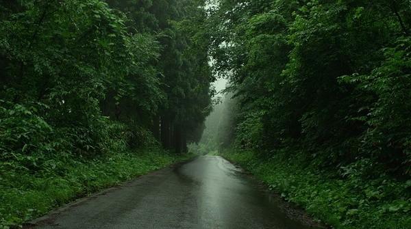 Con đường xuyên qua cánh rừng