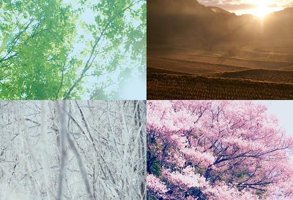 Bức tranh bốn mùa tuyệt đẹp ở làng Komori