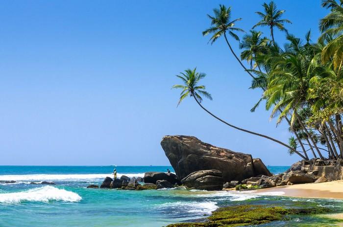 Dưới rặng dừa là biển cả bao la