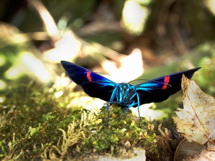 Nơi của những loài bướm xinh đẹp