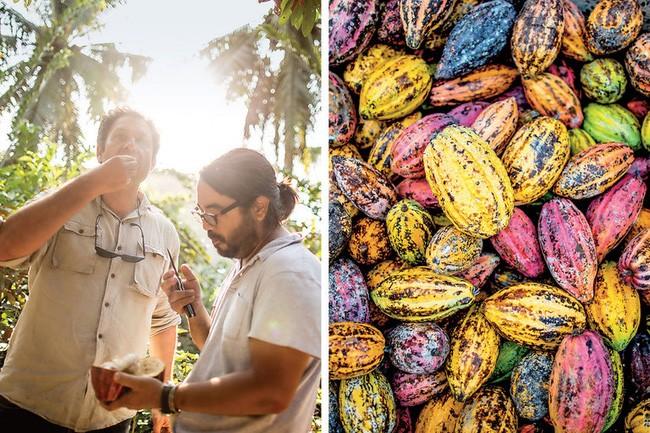 Hai người sáng lập ra Marou, Vincent Mourou (trái) và Samuel Maruta đang ăn thử cacao.