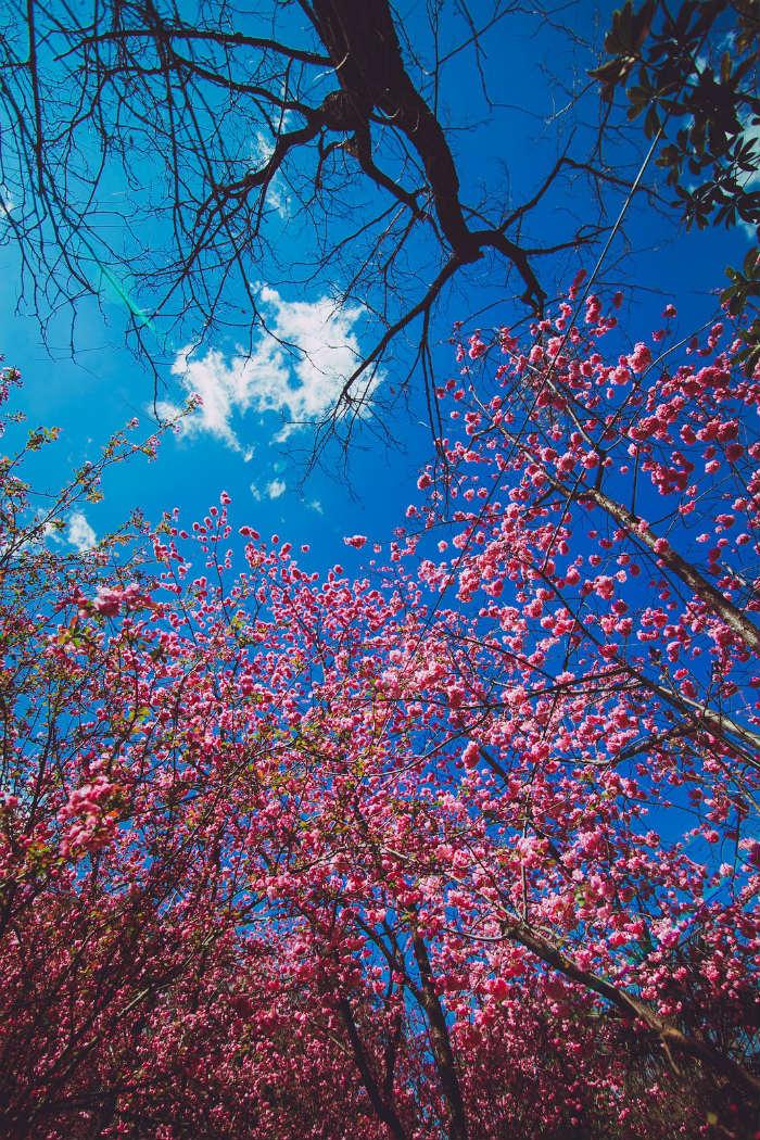 Rực rỡ sắc hoa ngày xuân
