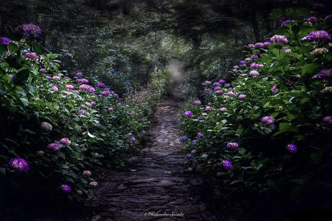 Chỉ cần vài bông hoa tươi thắm cũng đủ để làm cả đất trời ảm đam trở nên bừng sáng hơn hẳn.