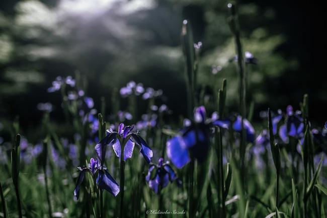 Tia nắng hiếm hoi đem đến sức sống cho cây cỏ muôn loài.