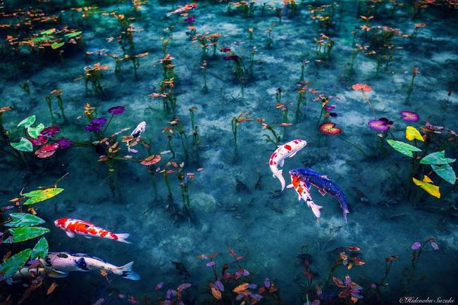 Sở hữu nét huyền ảo và ma mị, sẽ không ngoa nếu ví Nhật Bản còn đẹp hơn cả tranh vẽ đâu.