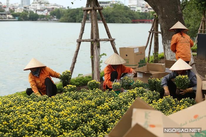 Đầu thu cũng là lúc hoa cúc vàng bắt đầu nở rộ, trên các con đường quanh bờ Hồ, từng chậu cúc nhỏ li ti mang đến diện mạo mới cho thành phố.