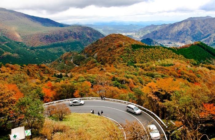 Sắc vàng óng ả như ôm lấy cả đất trời Nhật Bản.