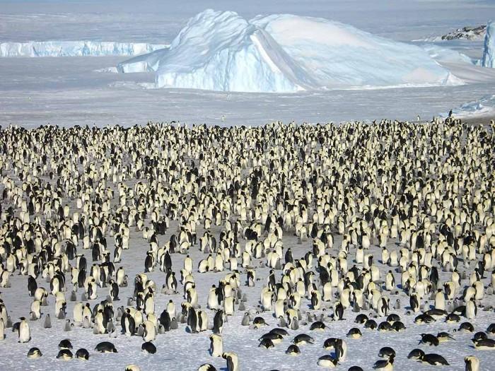Không quên ghé thăm 'ngôi nhà' của chim cánh cụt - Ảnh: White Desert