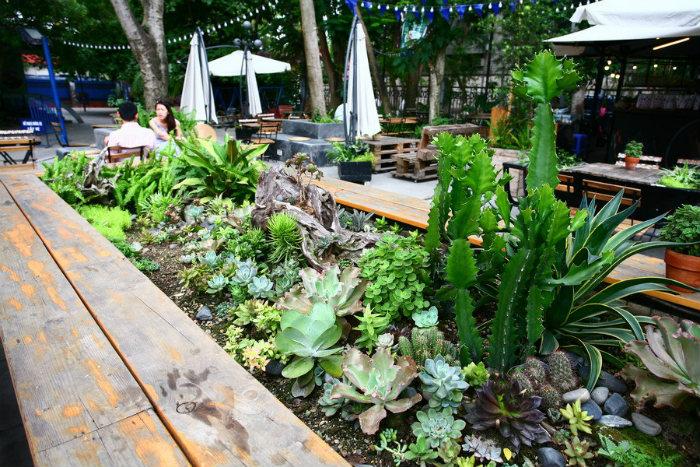 Bên ngoài cũng có những mảng xanh nho nhỏ trồng trong những thùng gỗ với nhiều loại cây.