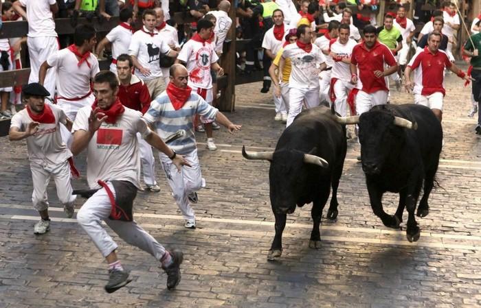 Cuộc rượt đuổi ngoạn mục cùng với những chú bò tót hung hăng