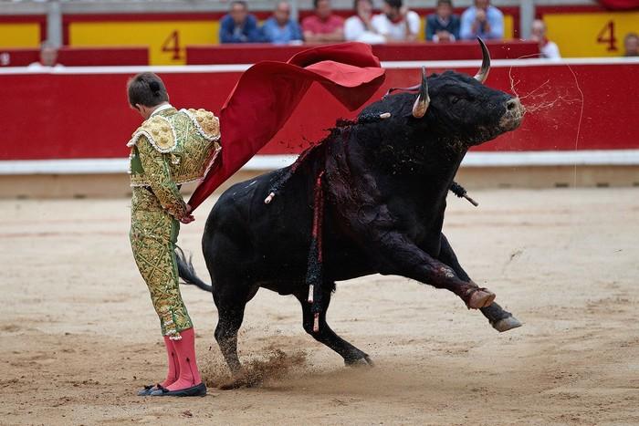 Du khách nghẹt thở thưởng thức màn đấu bò đặc trưng ở Tây Ban Nha