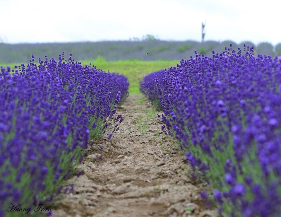 Nổi bật nhất là nông trại Tomita, vì những cánh đồng hoa oải hương ở đây cùng với dãy núi Tokachi tạo nên khung cảnh ngoạn mục. Khách du lịch có thể vào cửa tự do để thỏa sức ngắm nhìn và chụp ảnh.