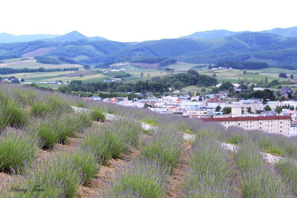 Oải hương ở đây trồng cũng có nhiều loại, trong đó gồm 4 loại chính là Okamurasaki, Hanamoiwa, Yotei và Dark Purple. Trong đó, loại Dark Purple cho hoa có màu đậm, còn Okamurasaki có màu khá nhạt, mỏng manh.