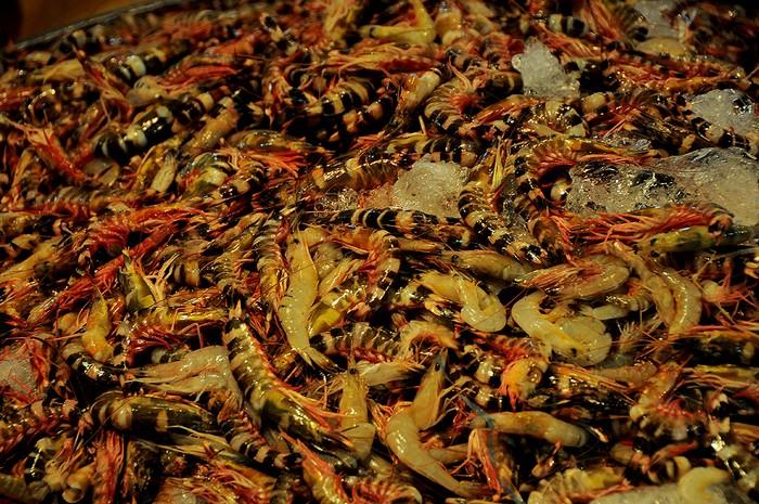 Tôm sắt, loại tôm biển có vỏ cứng nhưng thịt rất ngon và thơm