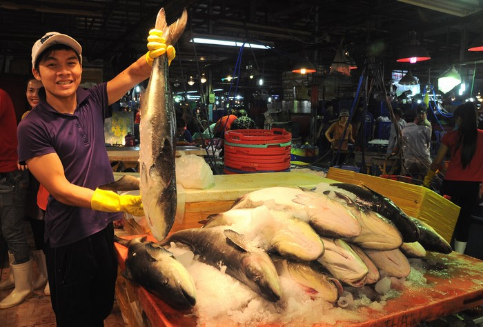 Người lần đầu đến chợ ắt hẳn sẽ thấy thú vị bởi tại đây có đến hàng trăm loại cá. Rất nhiều loại trong số đó, ngay cả người nội trợ cũng chưa biết tên hoặc đã biết tên nhưng chưa từng nhìn thấy. Trong ảnh là những con cá bớp loại trung bình.
