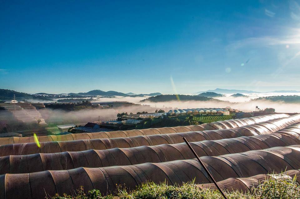 Quang cảnh những trang trại sáng sớm