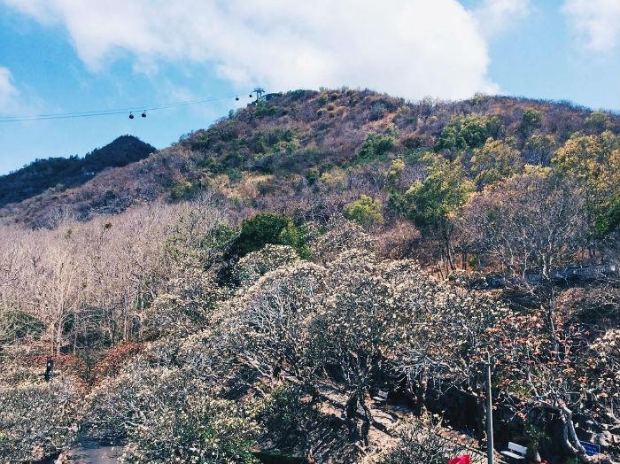 Vườn sứ trong Bạch Dinh