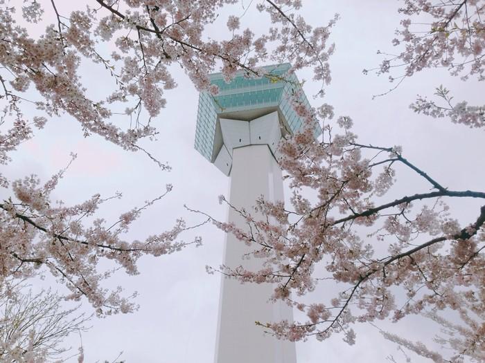 Vẻ đẹp tòa tháp ngôi sao và hoa anh đào mùa xuân