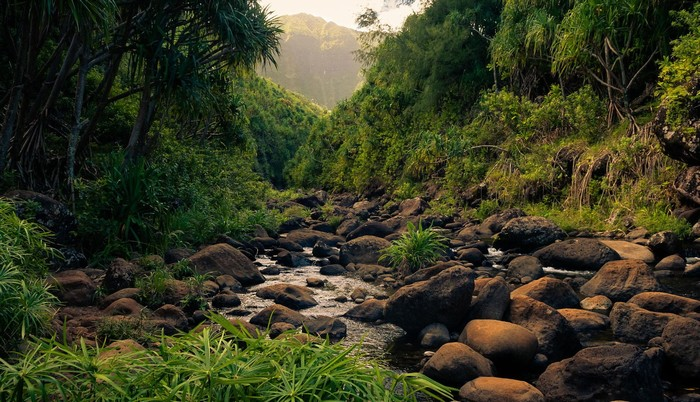 Khám phá khu rừng nhiệt đới bí ẩn