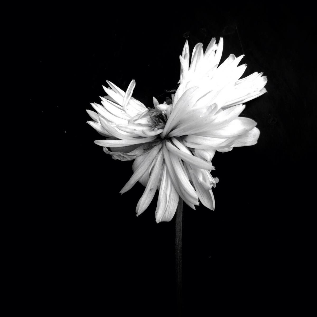 Hạng nhì thuộc về tác phẩm trắng đen của Amo Passicos đến từ Pháp.