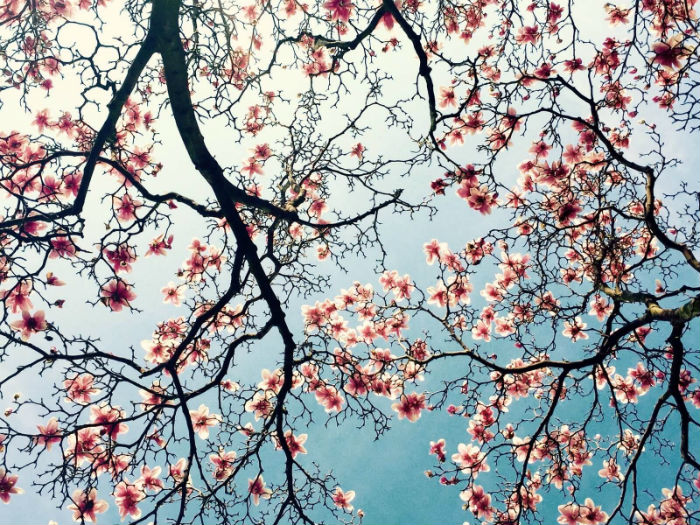 Hạng 3 dành cho vườn hoa rợp trời của Qinglan Qu, Mỹ.