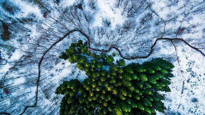Giải nhất hạng mục thiên nhiên hoang dã thuộc về khu rừng Kalbyris hùng vĩ tại Đan Mạch.
