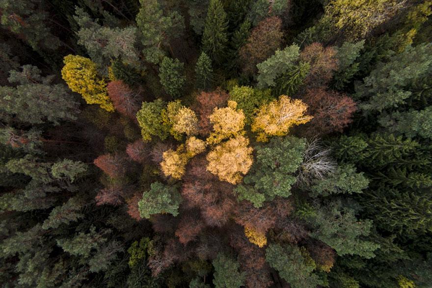 Khu rừng ngập tràn sắc xanh tại Rumsiskes, Litha.