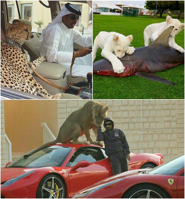 Thú cưng của người giàu tất nhiên cũng phải khác người thường rồi.