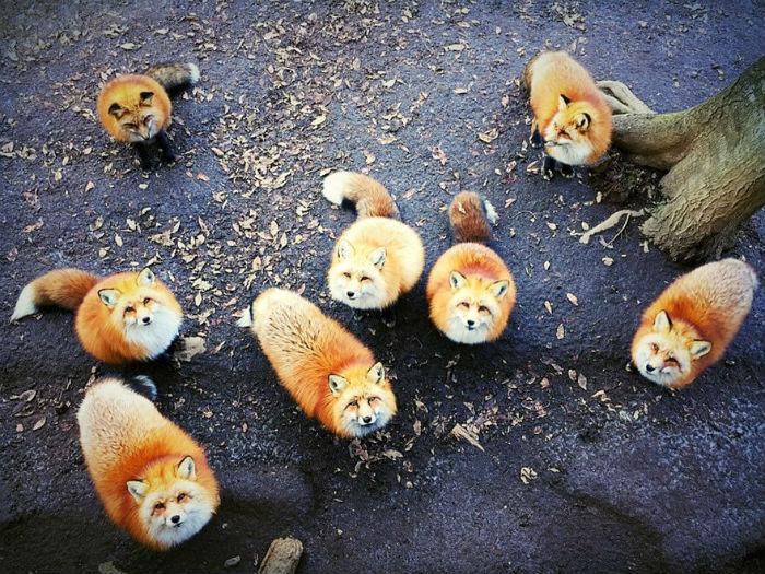 Erica Wu và những chú cáo dễ thương đến từ San Francisco, Mỹ giành giải nhất chủ đề Động vật.