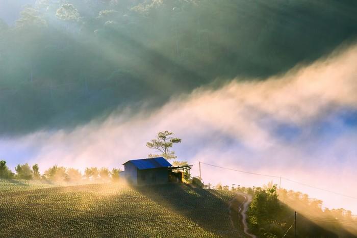 Mây sà xuống nhà ôm ấp vườn rau