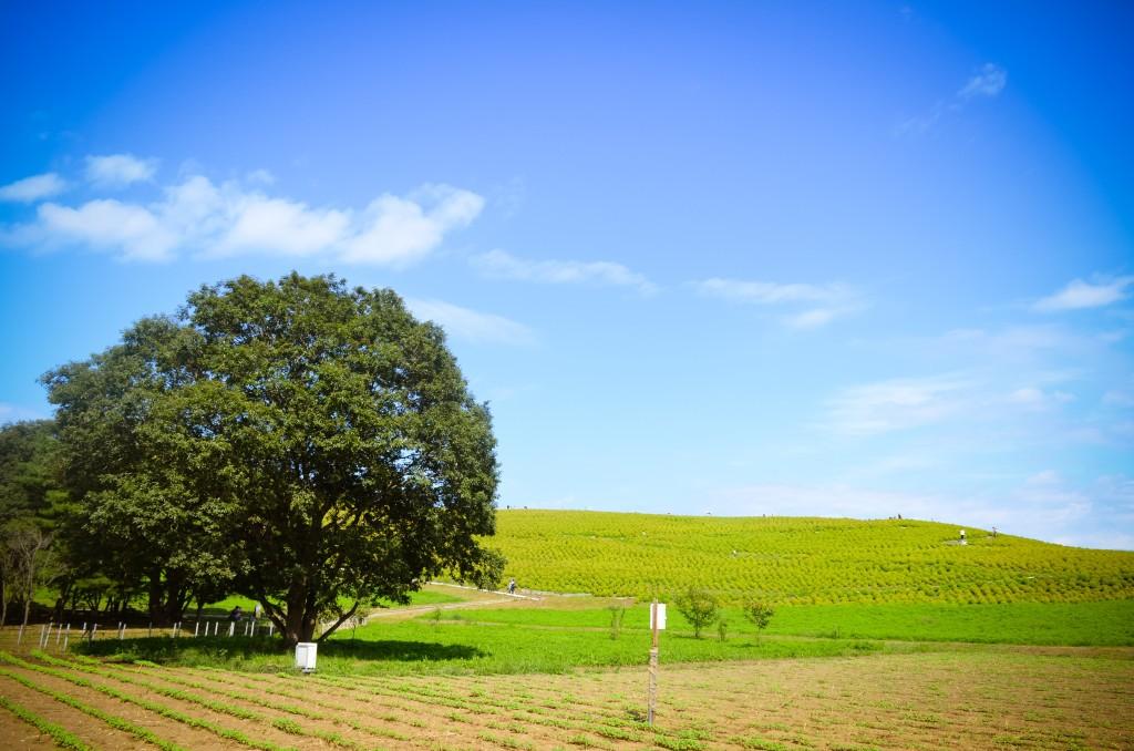 Yên bình trọn vẹn với cỏ cây Hitachi