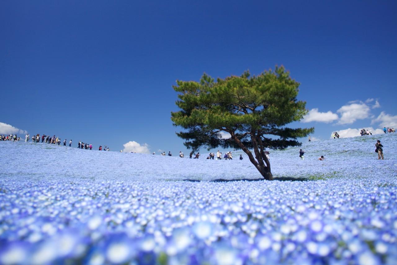 Vẻ đẹp như thiên đường của công viên Hitachi.