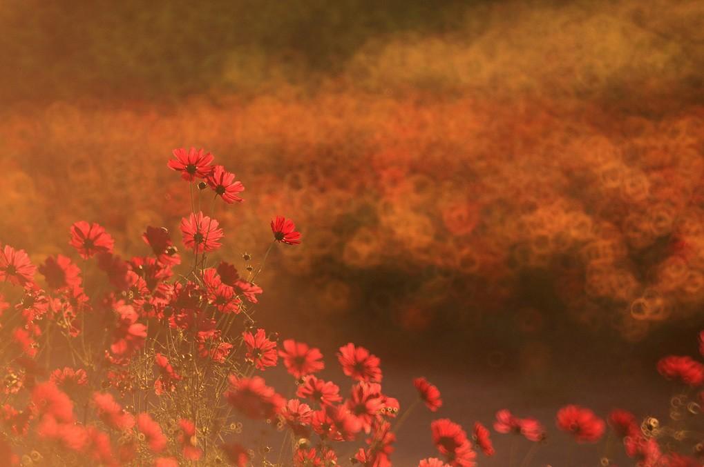 Mỗi màu hoa, một màu Hitachi kể chuyện