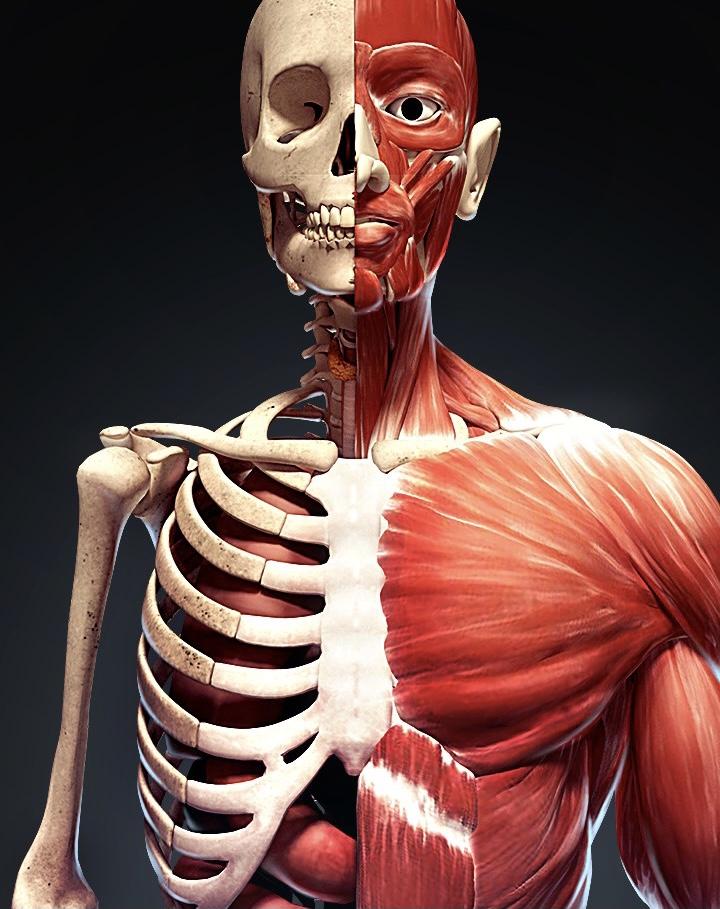 Medicine - Anatomy  Pharmacology Physiology