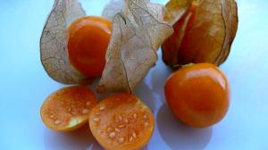 buah ciplukan matang