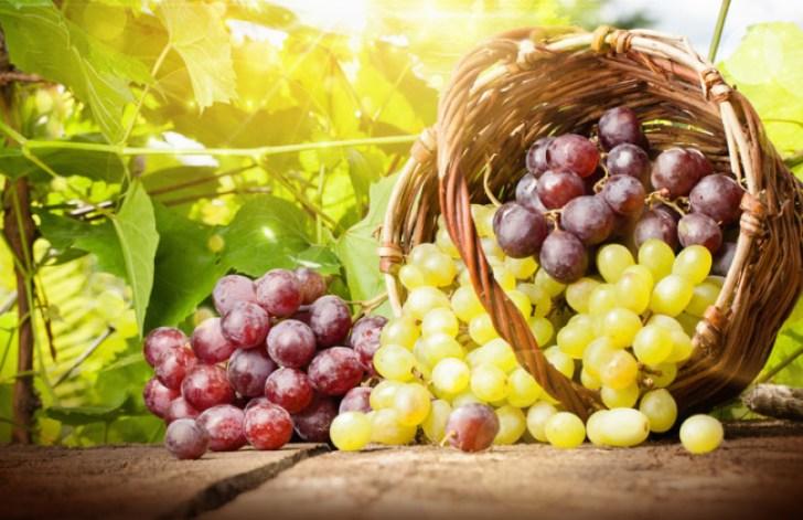 Cara Stek Anggur yang Benar Agar Berbuah Subur