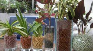 5 Cara Menanam Bunga Hias Hidroponik Serta Tips Perawatannya
