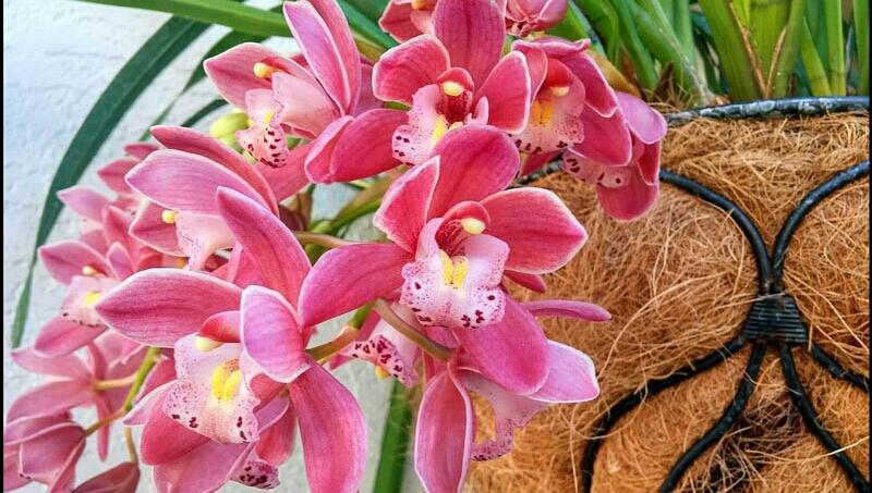 Unduh 910 Gambar Bunga Anggrek Yang Bagus HD Terbaik