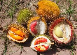 5 Cara Merawat Tanaman Durian Agar Cepat Berbuah