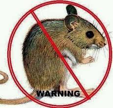 4 Cara Membasmi Hama Tikus dengan Oli Paling Ampuh