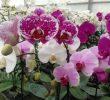 12 Cara Merawat Bunga Anggrek Agar Cepat Berbunga