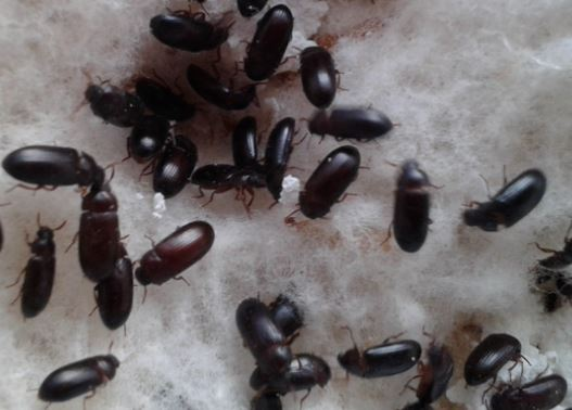 5 Cara Budidaya Semut Jepang Paling Mudah Dilakukan
