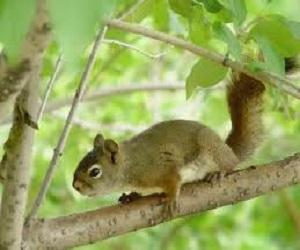 5 Cara Mengatasi Hama Tupai pada Durian Paling Efektif
