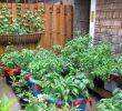 Cara Membuat Kebun Sayur di Pekarangan Rumah yang Mudah dan Sederhana