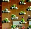 Cara Membuat Vertical Garden dari Botol Bekas di Rumah Anda