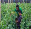 6 Tips Sukses Bertani dan Bercocok Tanam di Indonesia
